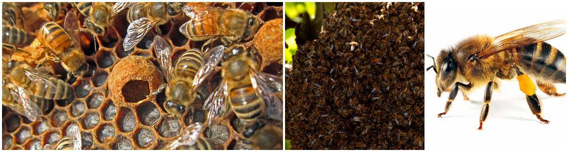 Bees nest Control - Warrington