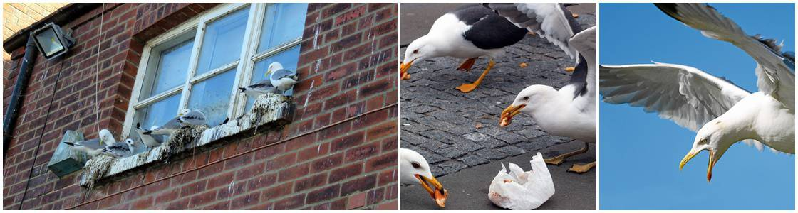 Sea Gull Control - Warrington, Liverpool